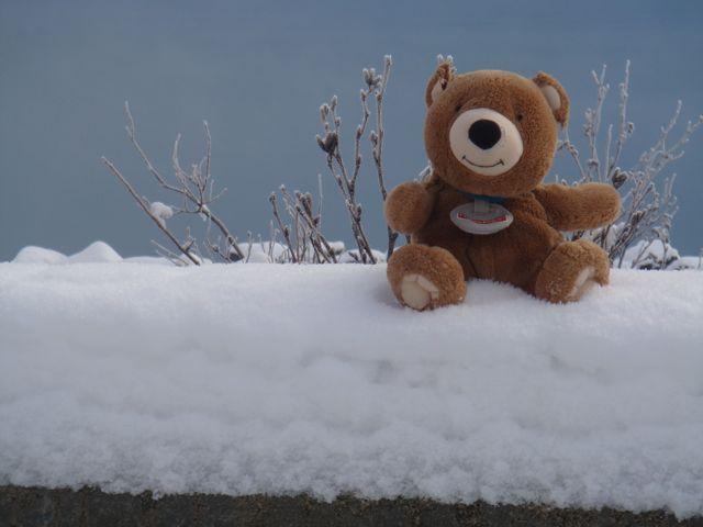 Imma Traveling Bear