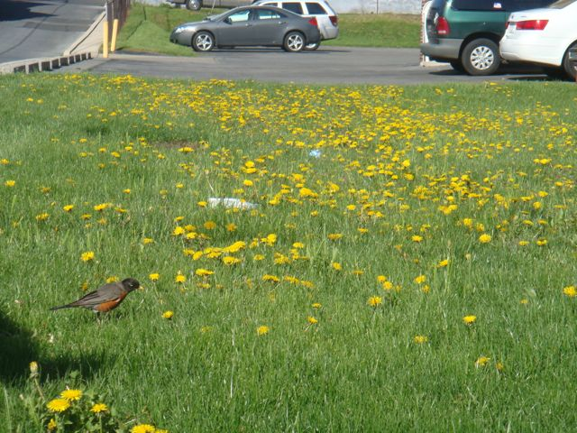 Robin Red Breast In Lower Left